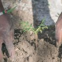 Partnering with One Tree Planted